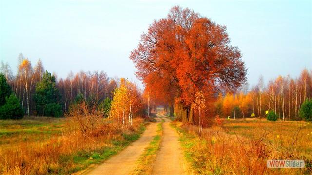 krajobraz jesienny - Skórzec